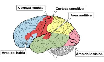 Sistema Sensorial