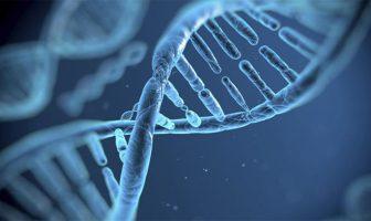 El gen que reduce la metástasis en tumores