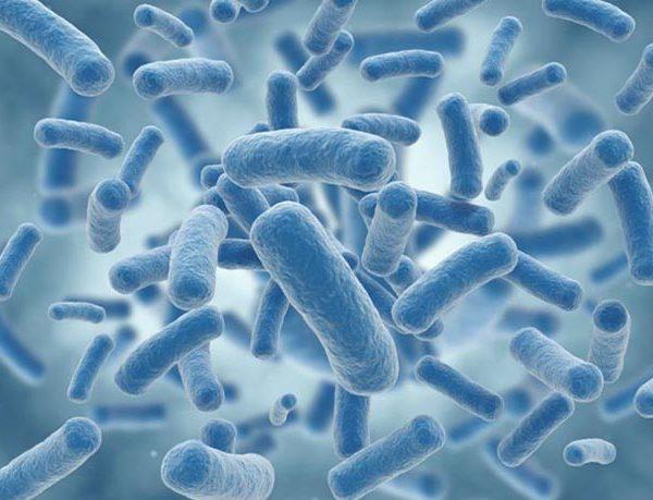 Un estudio analiza las bacterias intestinales para la prevención de la diabetes tipo 2
