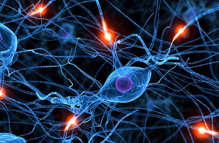 Serotonina neurotransmisor
