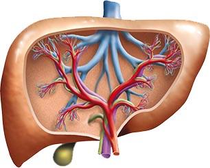 Transaminasas hígado